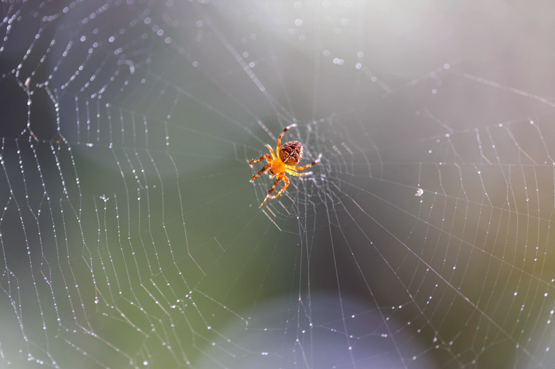 What_does_a_web_spider_or_crawler_do