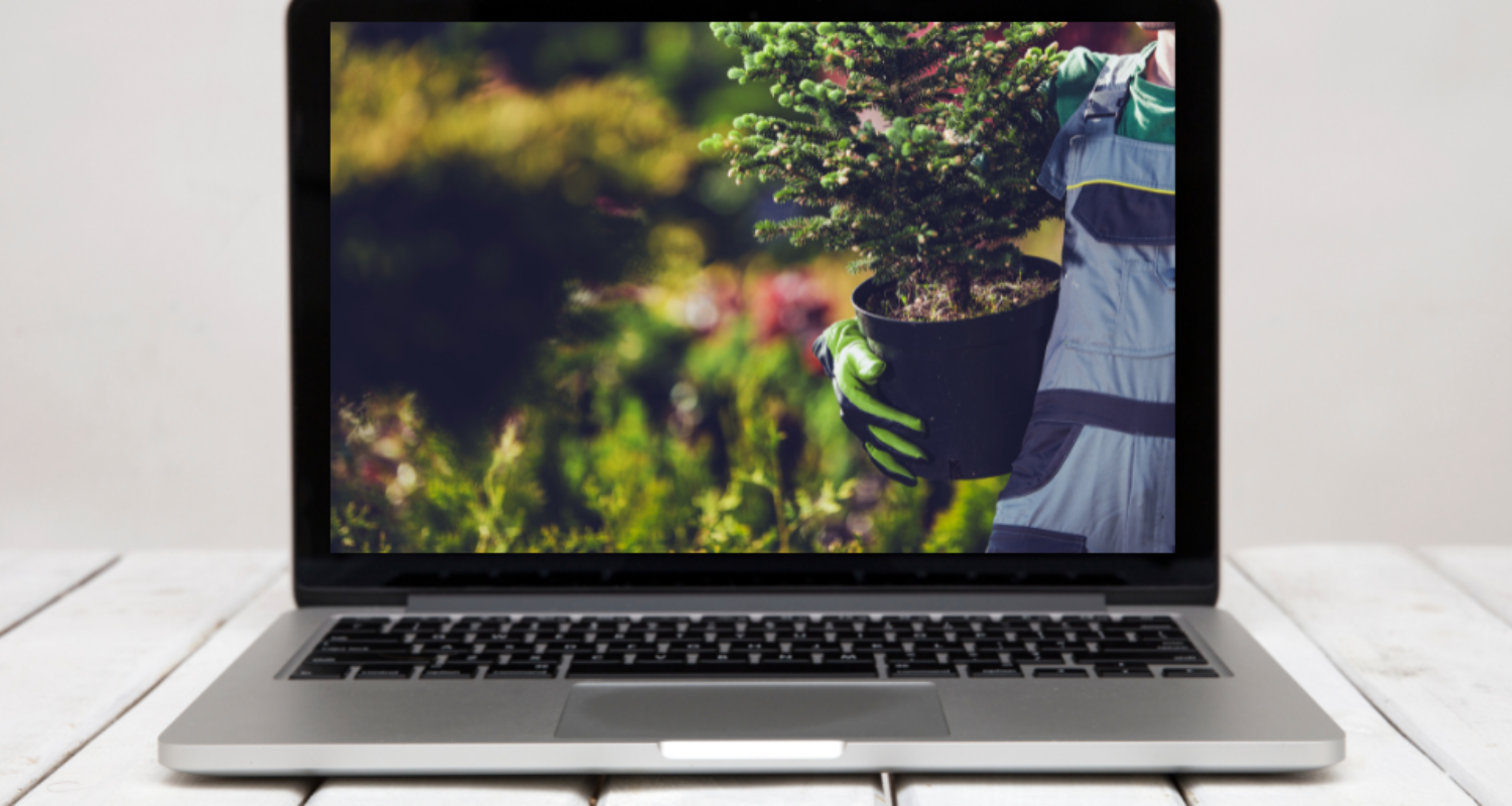 How can I make my website green? A Beginner's Guide to Sustainable Web-Development